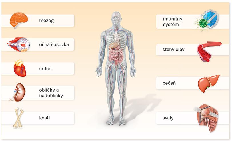 Vitamín c sa nachádza v mnohých orgánoch vo vysokých koncentráciách